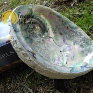 Abalone Concha XL 16-18 cm