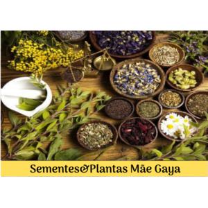 Sementes&Plantas da Mãe Gaya